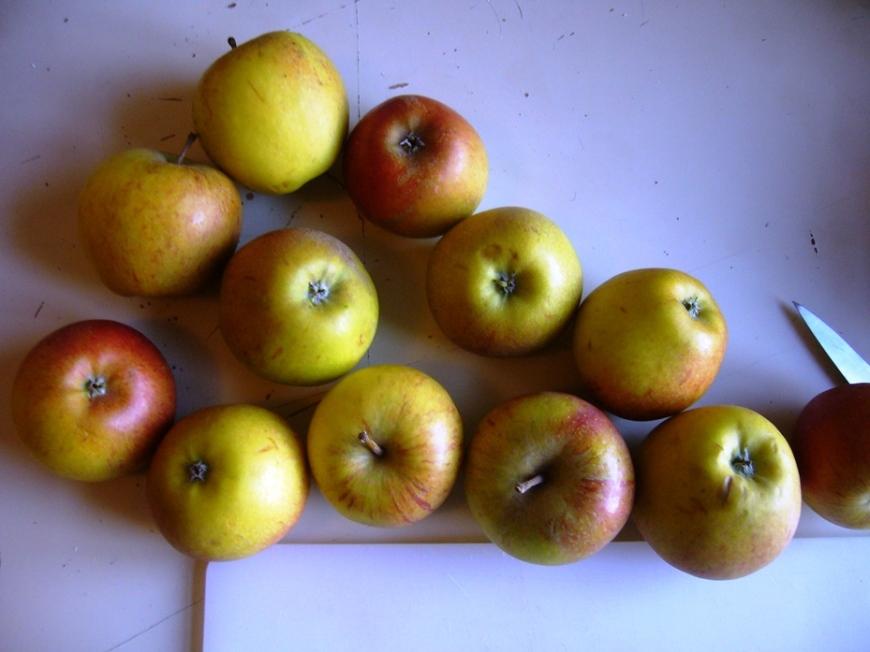 Les pommes de variété Cox