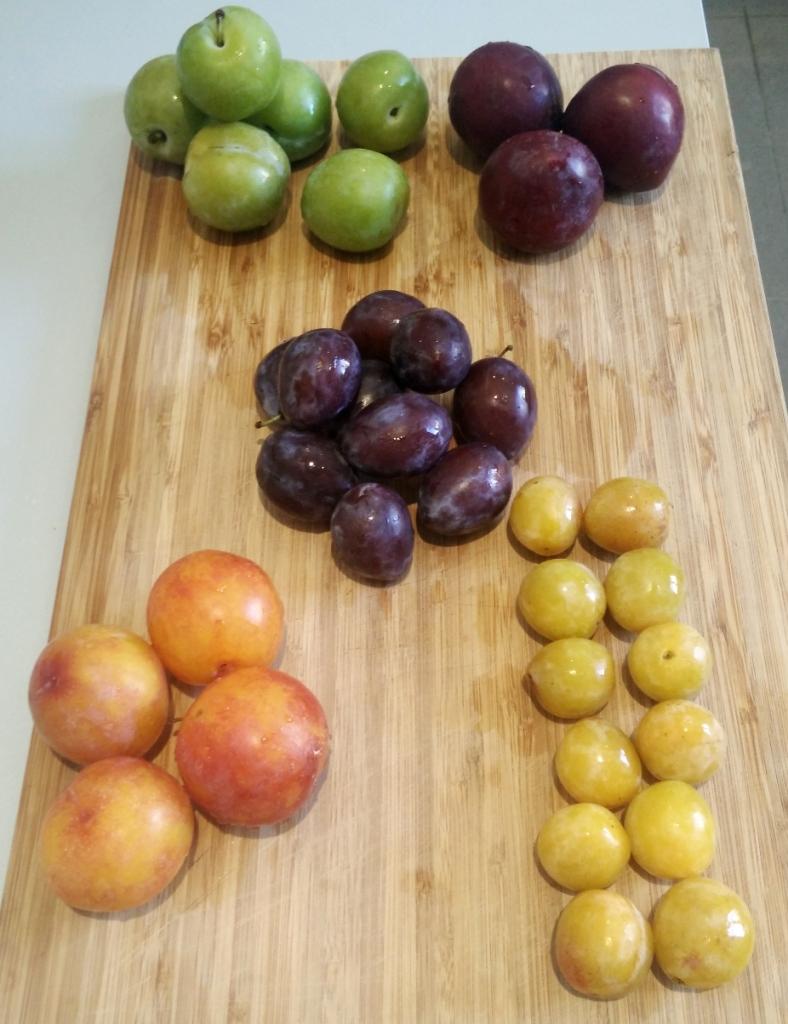 De haut en bas et de gauche à droite: reine claude, prunes rouges, quetsches, prunes jaunes, mirabelles.