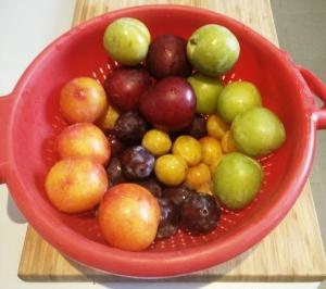 17-fruits
