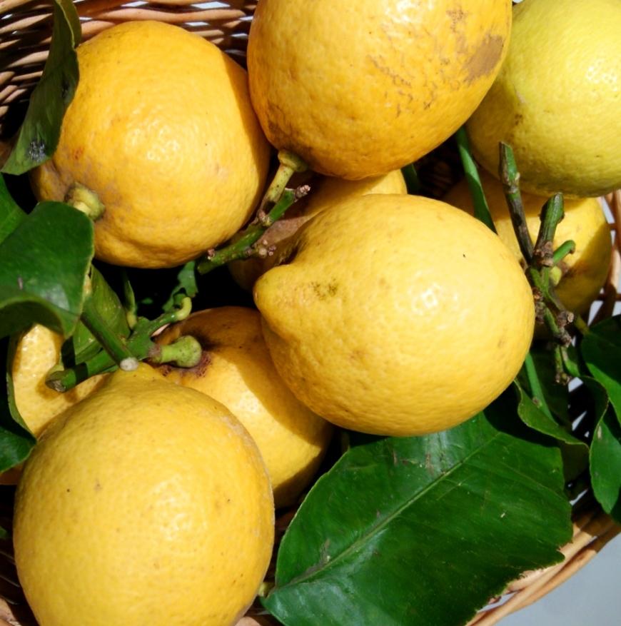 01-citrons